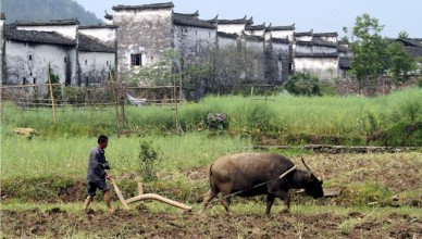 Agricoltura in Cina